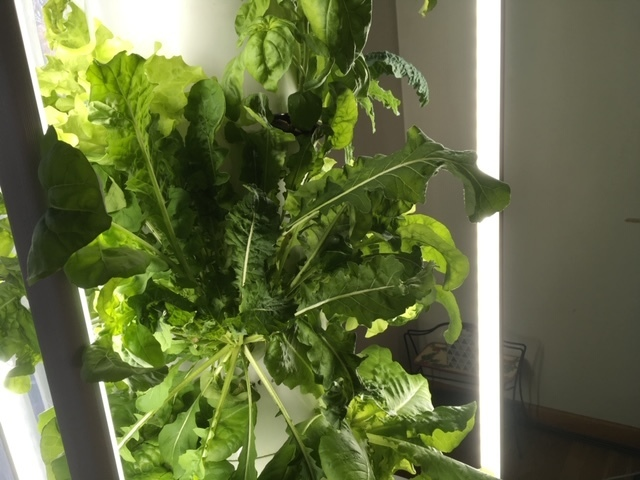 WSE tower garden