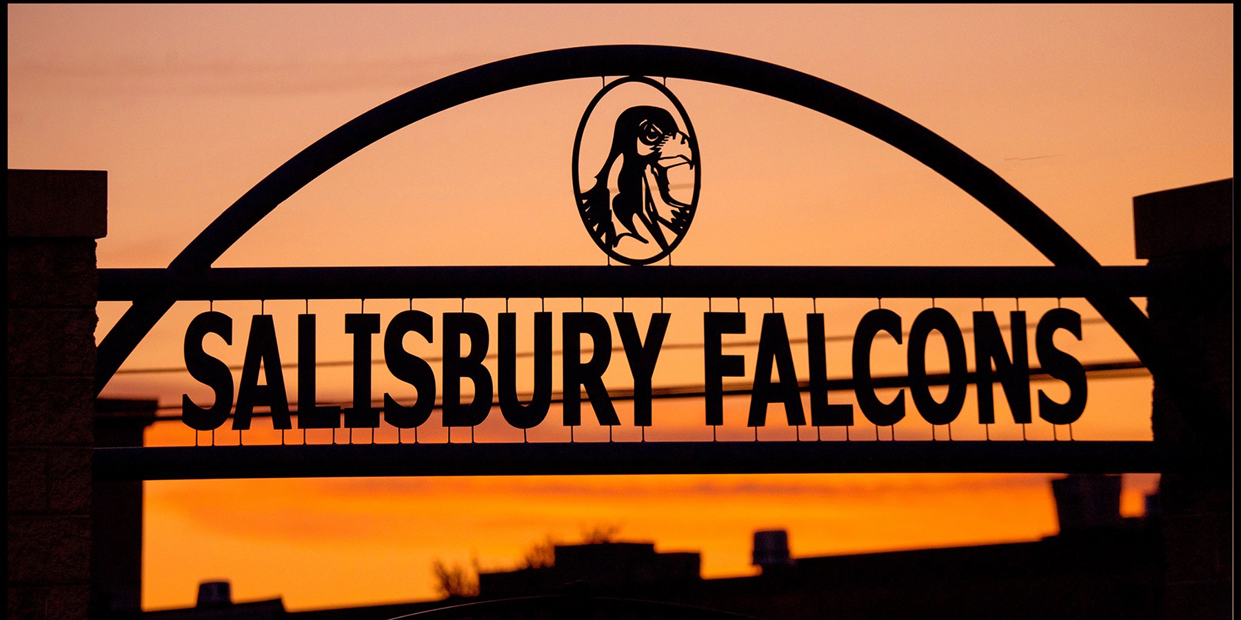 Salisbury Falcons at Sunset